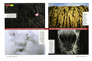 Publication: FOCUS (Italy), No. 218, Dez. 2010, Photography by Heidi & Hans-Jurgen Koch/animal-affairs.com