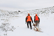 Young hunters drag a buck antelope towards a distant pick-up truck during a late season youth antelope hunt in the snow.