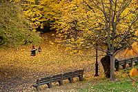 Amid the golden leaves of autumn; Central Park, Nov. 11, 2020.
