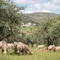 Yanoun, West Bank