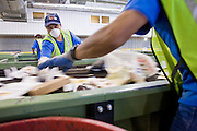12 MARCH 2007 -- PHOENIX, AZ: CARALAMPIA PINTO and a coworker sort recyclable paper products at the new recycling center in the city of Phoenix, AZ. The center opened in February 2007 and is the most modern recyclables processing center in the US. The center is operated by Hudson Baylor Corporation and processes about 1000 tonnes of recyclables a week.  Photo by Jack Kurtz/ZUMA Press