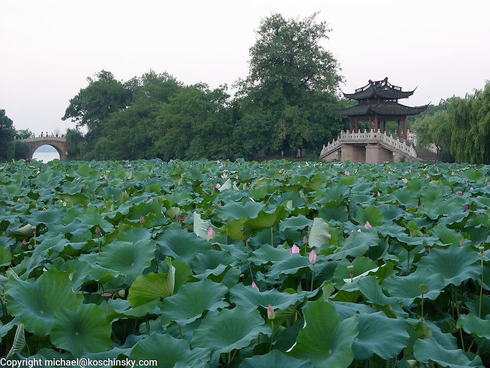 Chinese bridge over waterway embedded in parc, lotus leafes in foreground