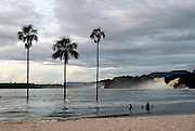 Palm trees stand out of the water in front of Hacha Falls in Canaima lagoon, at Canaima National Park, Venezuela