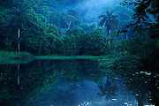 """""""Majestuosa primera luz, vigilante sereno de tierra embrujada"""".<br /> <br /> Amanecer virgen   bosque lluvioso tropical / Pluvisilva / Parque Nacional Camino de Cruces / Panamá.<br /> <br /> Edición limitada de 10 + 1 P/A - Fine Art"""
