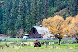 Horse ranch, in the forest of Coeur d'Alene Idaho