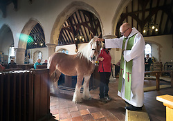 © Licensed to London News Pictures. 06/10/2019. Selsey, UK. Father Andy Wilkes blesses a horse called Murphy during the annual Service of Blessing of Animals at St Peter's Church in Selsey, West Sussex. Parishioners bring their pets to the church for the annual service after earlier attending a Harvest Festival celebration. Photo credit: Peter Macdiarmid/LNP