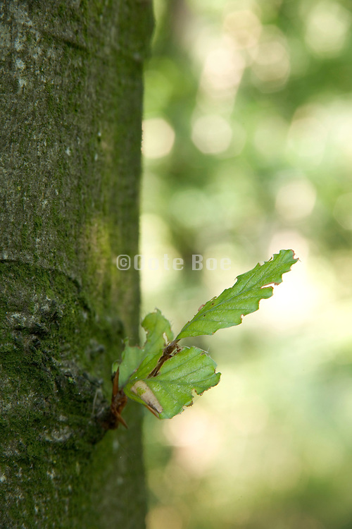 new twig growing on a tree trunk
