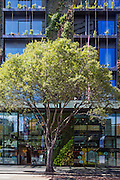 one central park, designed by jean nouvel, broadway, sydney