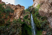 Ein Gedi sweet water springs, in the Judean desert, Israel, the lower waterfall in Wadi David nature reserve
