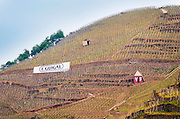 Terraced vineyards in the Cote Rotie district around Ampuis in northern Rhone planted with the Syrah grape. A sign saying E Guigal, the biggest producer, A small shed marked with VF for Vidal Fleuri.  Ampuis, Cote Rotie, Rhone, France, Europe
