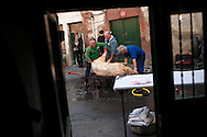 A professional butcher (in blue overalls) and some more men scrape with a knife a dead pig's skin in traditional way pig slaughtering.  Doneztebe (Basque Country). December 08. 2016. The slaughter traditionally takes place in the autum and early winter and the work often is done in the open. (Gari Garaialde / Bostok Photo)