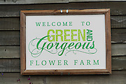 """Rachel is the owner of """"Green and Gorgeous"""" Flower Farm in Oxfordshire. She is well known for the flower arranging courses she offers. Her flower farm also caters for events, weddings and private picking<br /><br />British local flowers, grown nearby, count for around 10% of the UK market, traveling less than a tenth of their foreign counterparts which are often flown in from abroad. Nearly 90% of the flowers sold in the UK are actually imported, and many travel over 3000 miles. Local flower farms help biodiversity, providing food and habitat to a huge variety of wildlife, insects including butterflies, bugs, and bees. Often local flower farmers prefer to grow organic rather than using pesticides. British flowers bloom all the year around, even in the depths of winter, and there are local flower farms throughout the country.<br /><br />Many people like the idea of the just picked from the garden look, and come to flower farms throughout Britain to pick their own for weddings, parties and garden fetes. Others come for the joy of a day out in the countryside with their family. Often a bride and her family will come to pick the flowers for her own wedding, some even plant the seeds earlier in the year."""