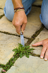 Weeding cracks in paving using an old knife