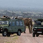 African Elephant (Loxodonta africana) Tourists photographing elephants in safari vehicles. Amboseli National Park. Kenya. Africa.