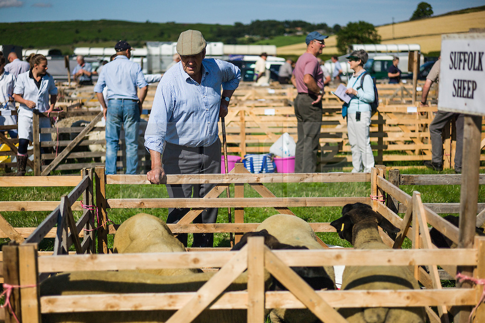 © Licensed to London News Pictures.12/08/15<br /> Danby, UK. <br /> <br /> A man looks at some Suffolk Sheep during the 155th Danby Agricultural Show in the Esk Valley in North Yorkshire. <br /> <br /> The popular agricultural show attracts competitors and visitors from all over the surrounding area to this annual showcase of country life. <br /> <br /> Photo credit : Ian Forsyth/LNP