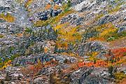 Autumn hues and fresh powder, John Muir Wilderness, Sierra Nevada Mountains, California USA