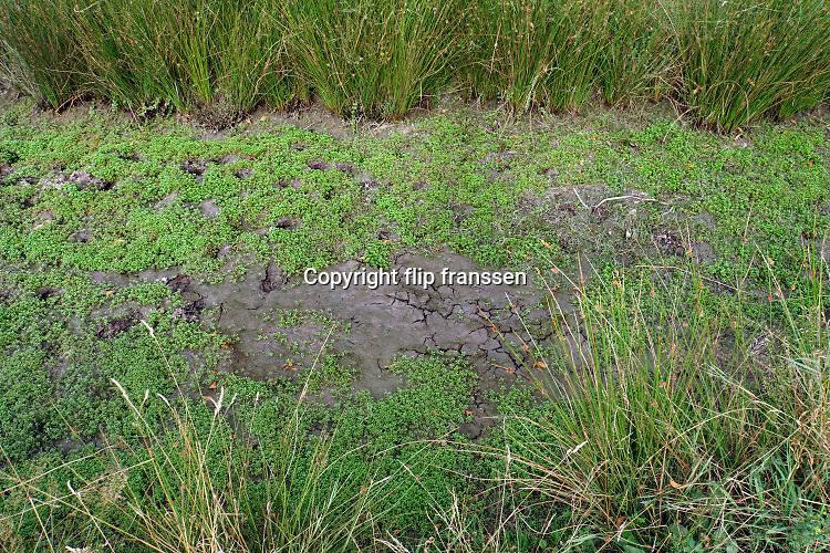 Nederland, Malden, 15-8-2020 Een droogevallen waterplas . Foto: ANP/ Hollandse Hoogte/ Flip Franssen
