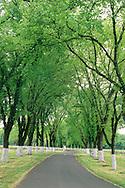 Trees along driveway at Fetzer Vineyards, near Hopland, Mendocino County, California