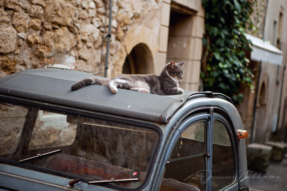 A cat is comfortably perched upon an old VW Bug parked in a narrow road in Lourmarin, Provence, France