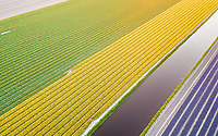 Aerial view of canal among beautiful Keukenhof tulip fields in Lisse, Netherlands