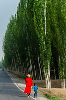 Rows of poplar trees planted along the south route of the old Silk Road near the Dawakul Lake, Xinjiang Province, China.