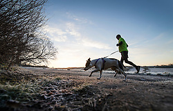 © Licensed to London News Pictures. 03/01/2017. Epsom, UK. A jogger runs with his dog as frost covers Epsom Downs. Parts of the UK are experiencing temperatures as low as -5 degrees centigrade. Photo credit: Peter Macdiarmid/LNP