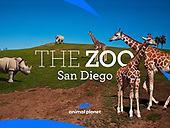 """March 27, 2021 (USA): Discovery+ """"The Zoo: San Diego"""" Episode"""