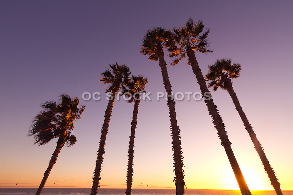 Palm Tree Silhouette at Sunset in Huntington Beach, CA
