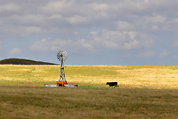 Old west style windmill attracts nearby cattle to drink the water it pumps and dots the landscape standing as a landmark against the prairie horizon in Northwest Nebraska