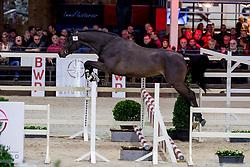 014, Rimaro Van De Looise Heide<br /> BWP Hengstenkeuring -  Lier 2020<br /> © Hippo Foto - Dirk Caremans<br />  17/01/2020