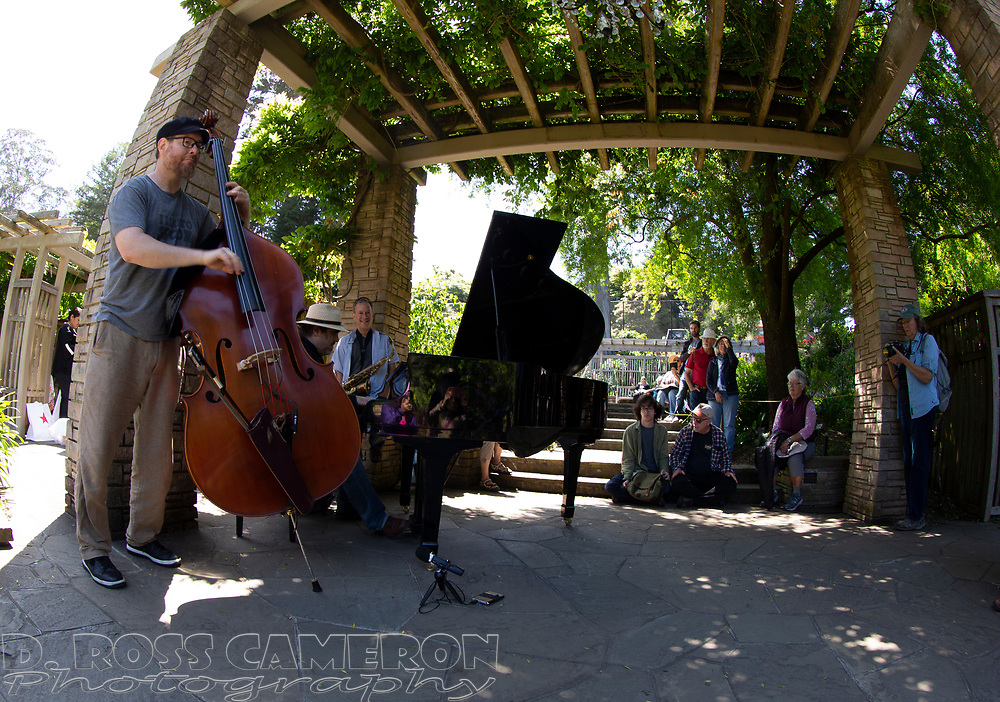 An unidentified jazz trio performs at the fifth annual Flower Piano exhibition at the San Francisco Botanical Garden in Golden Gate Park, Friday, July 19, 2019 in San Francisco. The exhibition continues through Monday. (Photo by D. Ross Cameron)