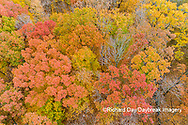 63876-02401 Aerial view of fall color trees Stephen A. Forbes State Park Marion Co. IL