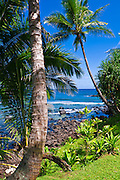 Coconut palms and blue Pacific waters from Hideaways Beach, Island of Kauai, Hawaii