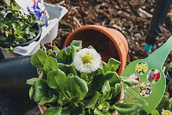 THEMENBILD - Frühlingsblumen wie Belis, Stiefmütterchen und Narzissen werden gerne in Töpfen als Dekoration gepflanzt, aufgenommen am 09. März 2020 in Kaprun, Oesterreich // Spring flowers like belis, pansies and daffodils are often planted in pots as decoration, in Kaprun, Austria on 2020/03/09. EXPA Pictures © 2020, PhotoCredit: EXPA/Stefanie Oberhauser