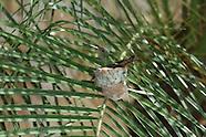 15: ECOTEACH HUMMINGBIRD, COATI, HOWLER