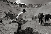 pvcredrock1/5-28-03/jp3/asec.  Twenty year-old John Pfeiffer (CQ) of Bloomfield, N.M. tosses a slice of a hay bale toward a group of hungry broncos corraled in at the Red Rock State Park in Church Rock, N.M. as he's assisted by his Australian Shepherd dog named