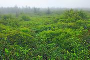Boggy habitat along the trail leading to the Atlantic Ocean<br /> Kejimkujik National Park (Seaside Adjunct)<br /> Nova Scotia<br /> Canada