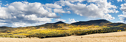 Fall color of quaking aspens (Populus tremuloides) near Underwood Lake, Vermejo Park Ranch, New Mexico, USA.