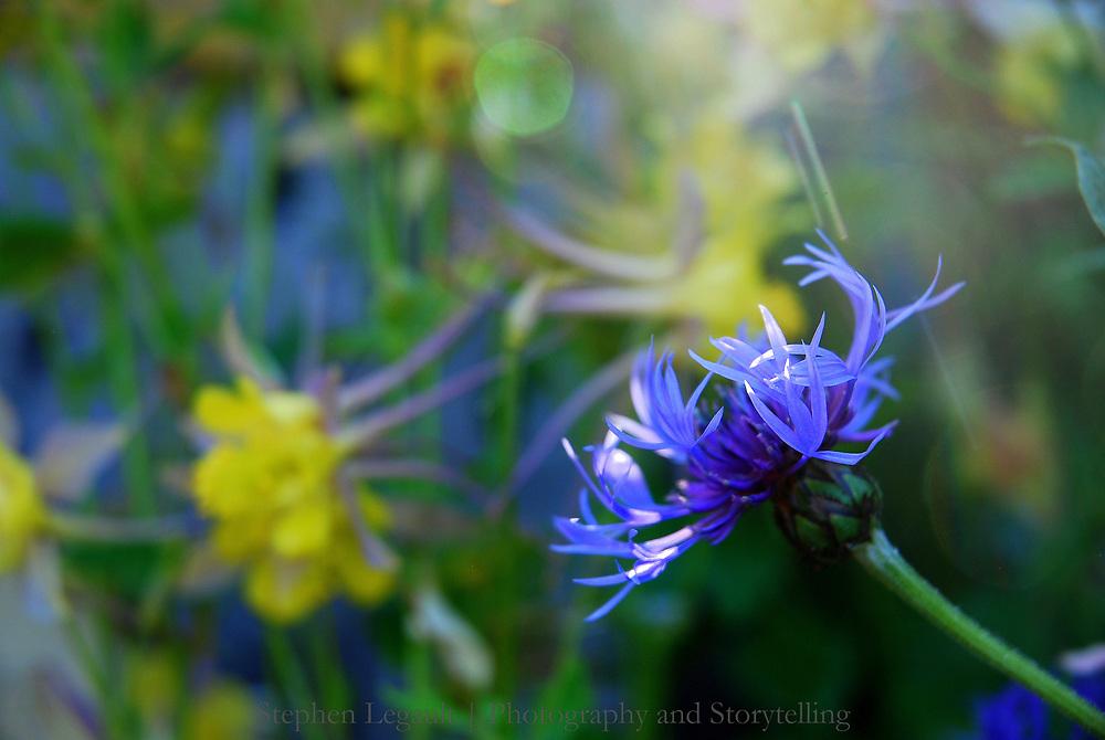 Backyard Garden Flowers