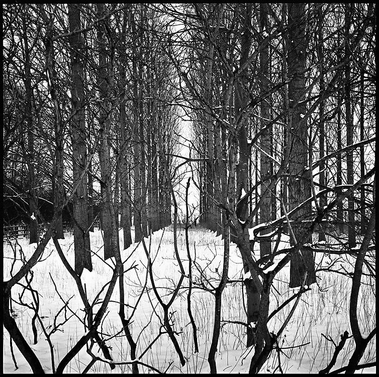 Treeline, Beccles, Suffolk 2013