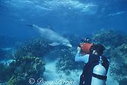 cinematographer Howard Hall films Honey, a wild sociable bottlenose dolphin, or ambassador dolphin, Lighthouse Reef Atoll, Belize, Central America ( Caribbean Sea )