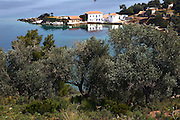 Greece, Thessaly, Agia Kiriaki, overlooking the bay and the little fishing village at the south west point of the peninsula Pelion Olive trees in the foreground