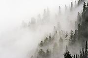 Cloud forest, Glacier National Park, Montana