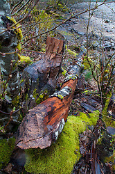 Log and Mossy Rock at Diablo Lake, North Cascades National Park, Washington, US