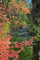 Autumn, Big Elk Creek, Swan Valley, Idaho