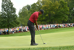 August 12, 2018 - St. Louis, Missouri, U.S. - ST. LOUIS, MO - AUGUST 12: Tiger Woods hits a birdie putt on the #1 green during the final round of the PGA Championship on August 12, 2018, at Bellerive Country Club, St. Louis, MO.  (Photo by Keith Gillett/Icon Sportswire) (Credit Image: © Keith Gillett/Icon SMI via ZUMA Press)