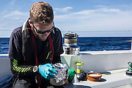 North Atlantic Ocean, October 2014.<br /> Marine biologist Adam Porter wraps a sample in fpil to protect it from sunlight on board the Sea Dragon. © Chiara Marina Grioni