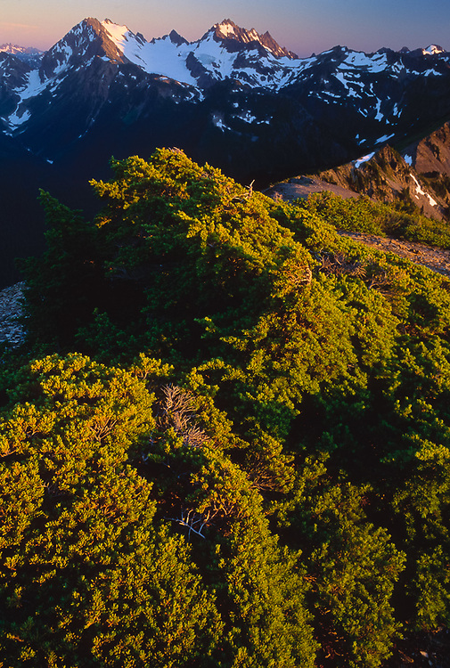 View from Sentinel Peak, Mount Anderson and Eel Glacier, evening light, July, Olympic Natinal Park, Washington, USA