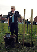 © Licensed to London News Pictures. 14/02/2012, Hillingdon, UK. BORIS JOHNSON straightens his tie before the planting. Mayor of London Boris Johnson marks the delivery of the the 10,000 tree promised to Londoners in his manifesto by planting a Acer Campestre, commonly known as a Field Maple, in Hillingdon today 14 February 2012.  Photo credit : Stephen Simpson/LNP