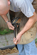 Farrier attaching a shoe to a horse's hoof - clipping the nails